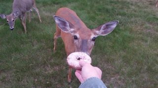 deer-donut-01